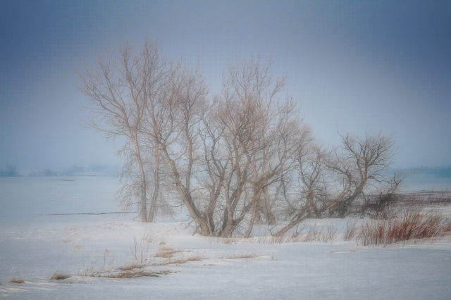 "Arnold Berkman, ""Prairie Winter, Photography, $350.00"