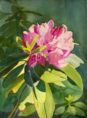 Sherry Adams Foster, Rhododendron's Moment In The Sun, 28x36, Watercolor, $450