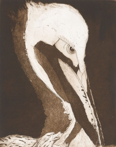 Sherry Adams Foster, Prudish Pelican, 16 x 14, etching with aquatint, $150