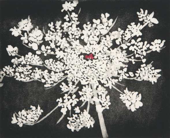 Sherry Adams Foster, Queen Annes Lace, etching, $150