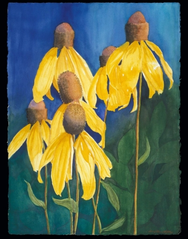 Sherry Adams Foster, Prairie Coneflowers, 36 x 28, watercolor, $400