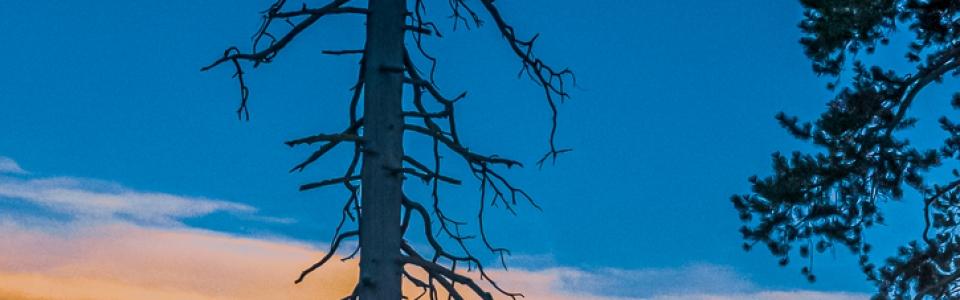 Arnold Berkman – Berkman-Birch Californiw